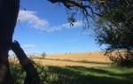 Закон о межевании земельных участков 2021: понятие и процедура, порядок работ, стоимость и сроки, ФЗ 477