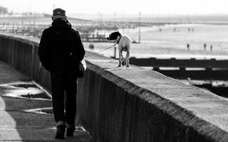Правила и закон о выгуле собак: намордники, поводки и их отсутствие, где можно гулять и ответственность за нарушение