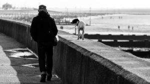 Выгул собак в общественном месте